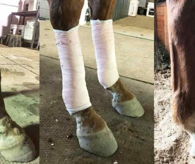 cj-leg-treatments-feature