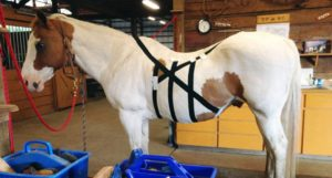RockTape to Support Your Horse