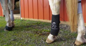 Microcurrent Therapy for Equines