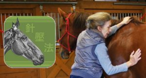 Equine AcuPoints App: Review